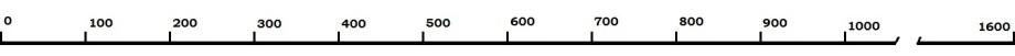 шкала 01600